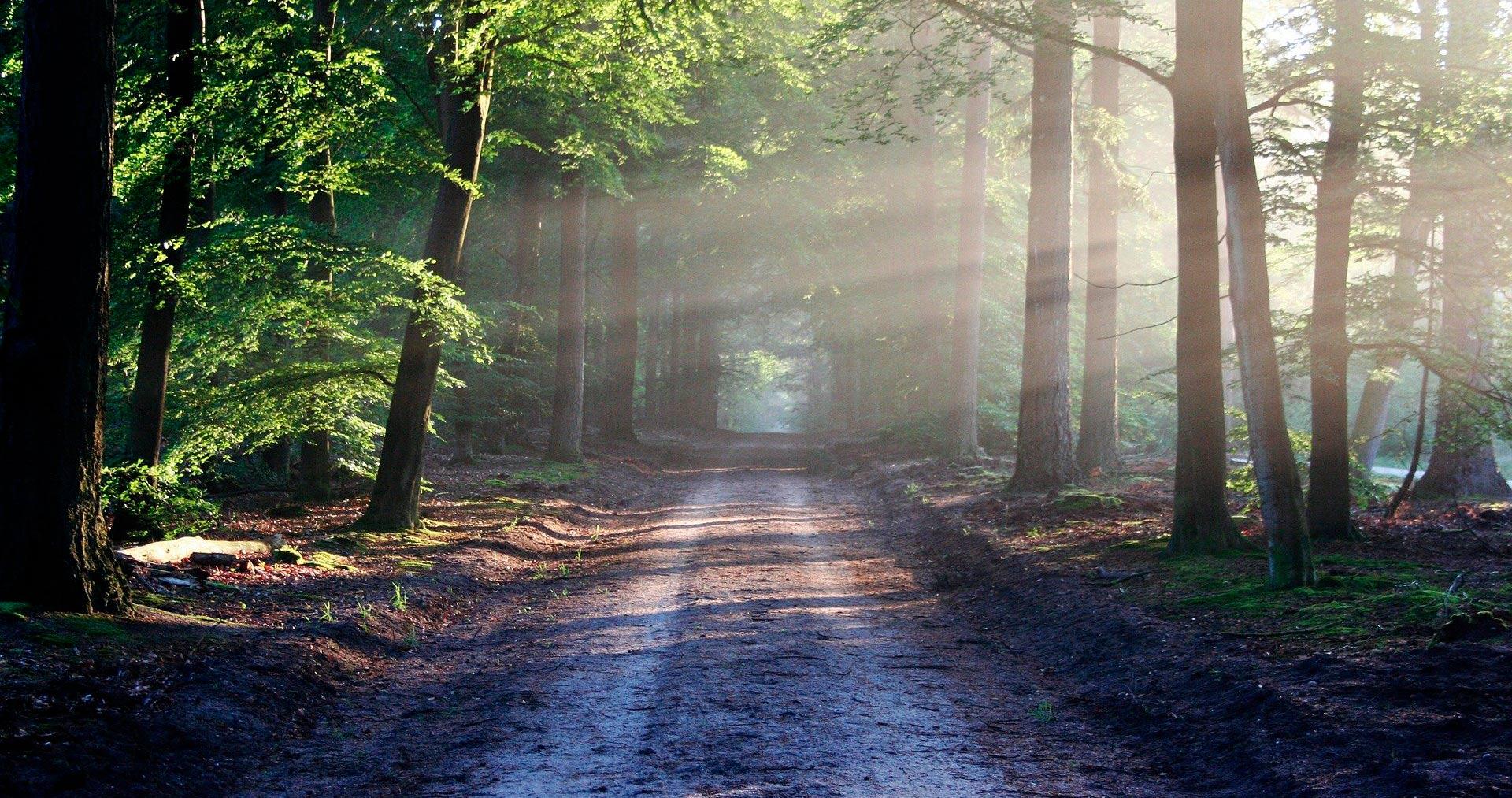 Metsäinen polku ja auringonpaiste